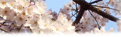 Sakura200904_2